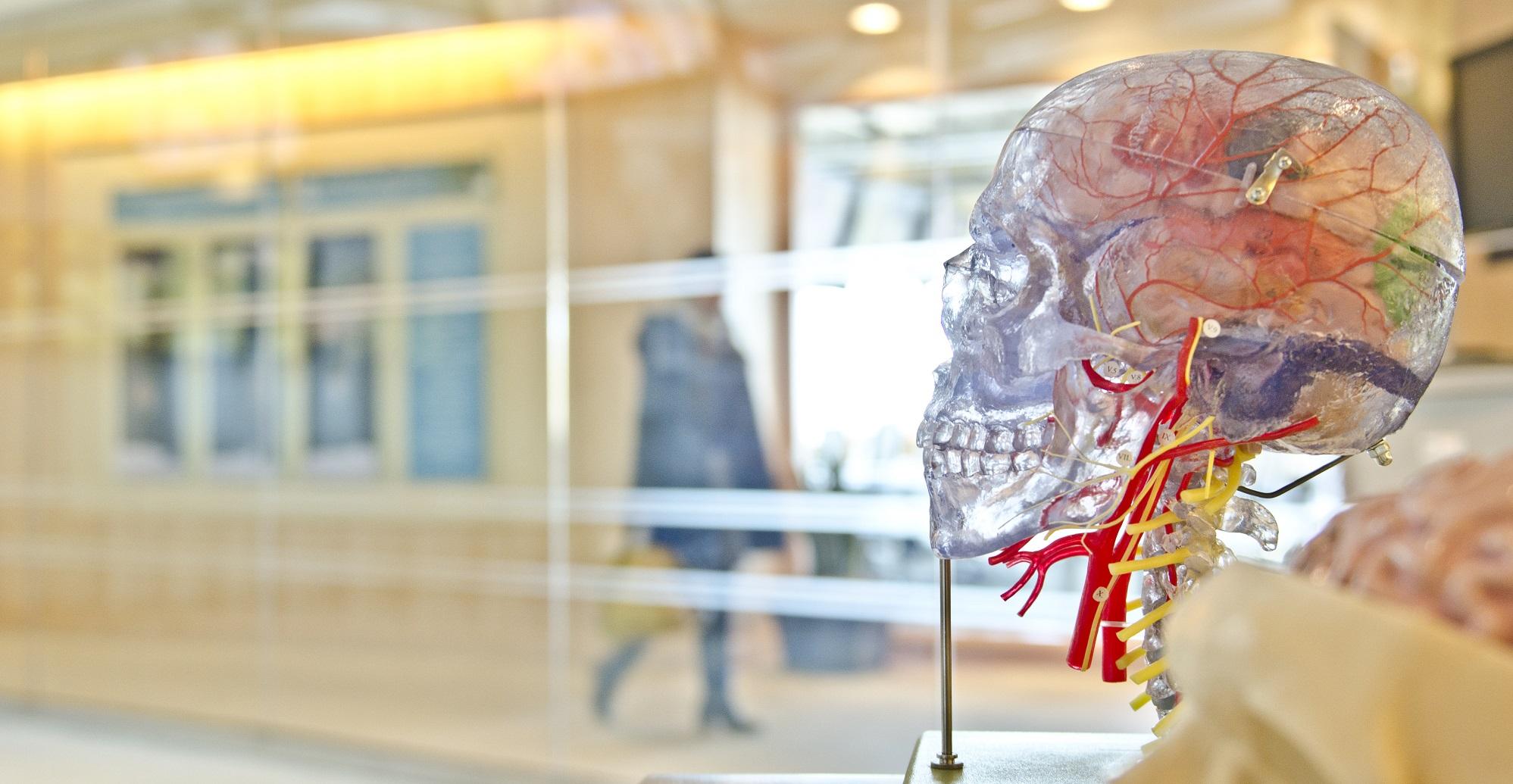 Autologe Stamcel therapie voor MS: een doorbraak?